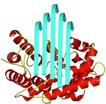 Logo Novel Enzymes